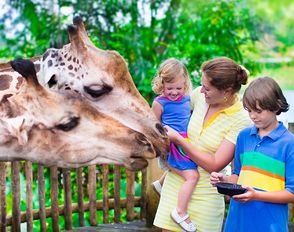 International Giraffe Day at Dvur Kralove Zoo